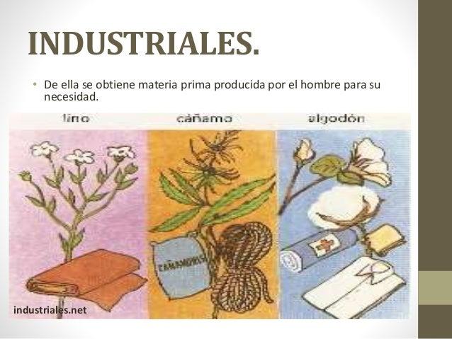 Clasificación de las plantas por su utilidad