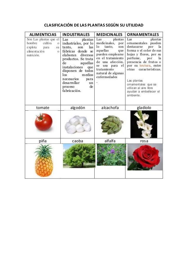 CLASIFICACIÓN DE LAS PLANTAS SEGÚN SU UTILIDADALIMENTICIAS