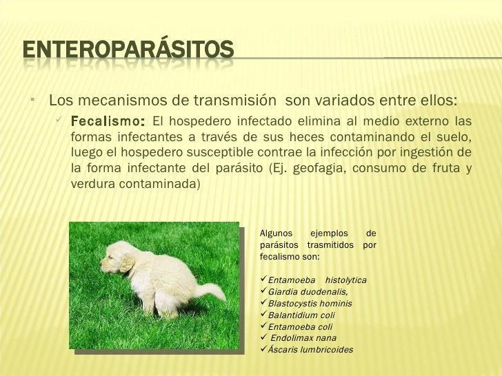 Las medicinas contra los parásitos para los conejos