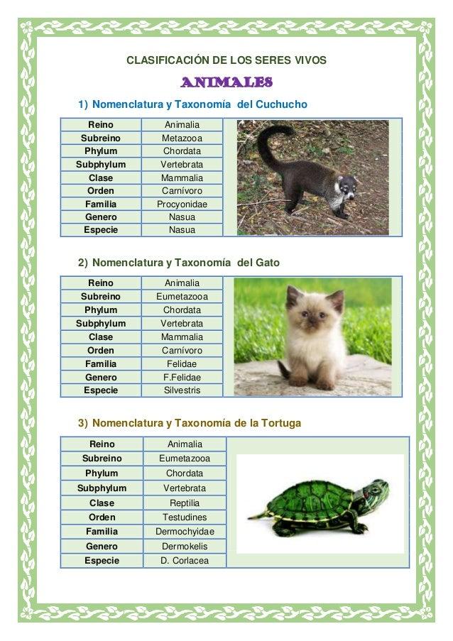 CLASIFICACIÓN DE LOS SERES VIVOS ANIMALES 1) Nomenclatura y Taxonomía del Cuchucho Reino Animalia Subreino Metazooa Phylum...