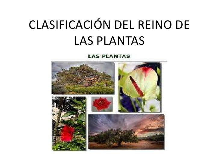 CLASIFICACIÓN DEL REINO DE LAS PLANTAS<br />