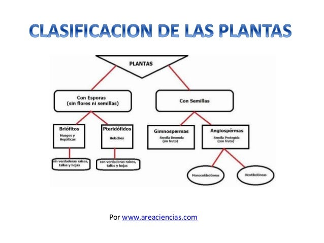 Tipos de flores slideshare clasificacion de las plantas for Clases de plantas ornamentales