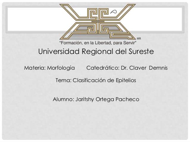 Universidad Regional del SuresteMateria: Morfología    Catedrático: Dr. Claver Demnis           Tema: Clasificación de Epi...