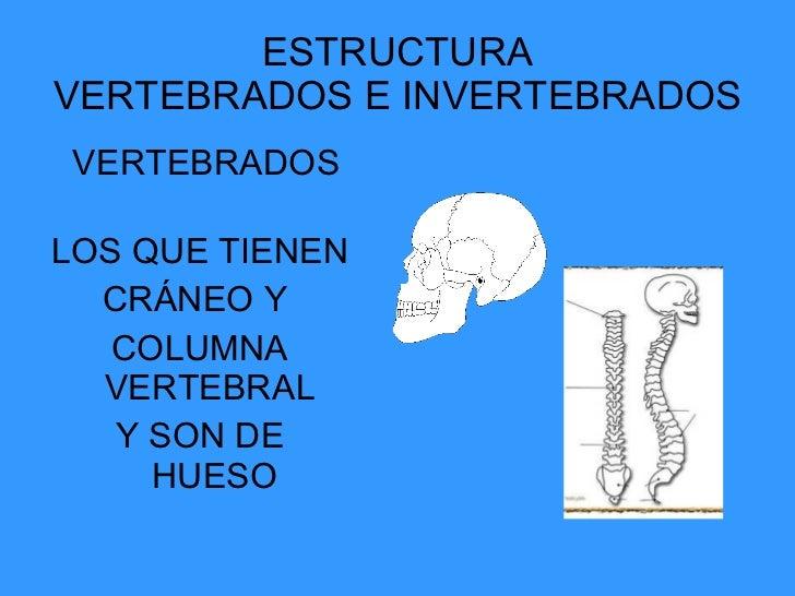 ESTRUCTURA VERTEBRADOS E INVERTEBRADOS <ul><li>VERTEBRADOS  </li></ul><ul><li>LOS QUE TIENEN </li></ul><ul><li>CRÁNEO Y  <...