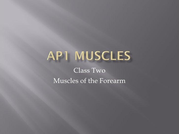 Class 2 Ap1 Muscles