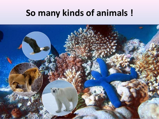 So many kinds of animals ! Animals pictures- birds, snake, elephant, tiger etc.