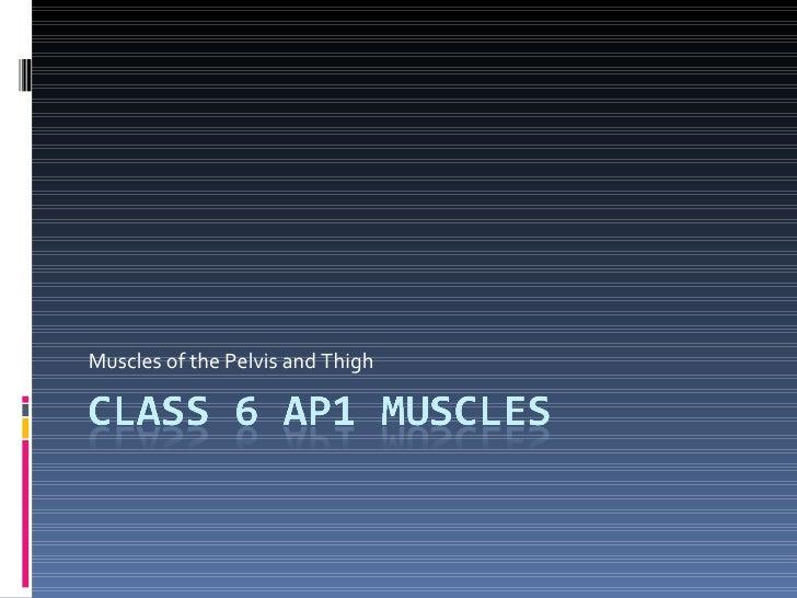 Class 6 Ap1 Muscles