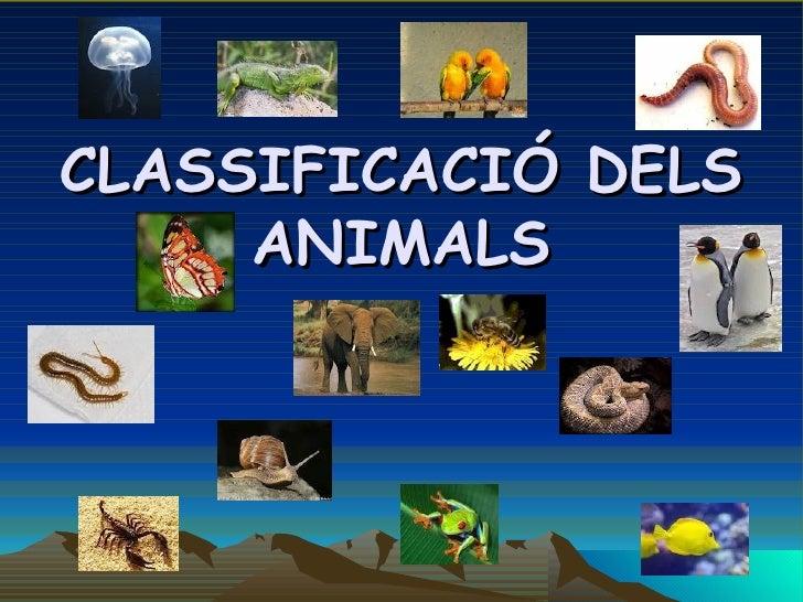 CLASSIFICACIÓ DELS     ANIMALS