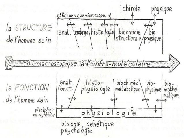 Classification des matieres medicales & niveaux d'organisation