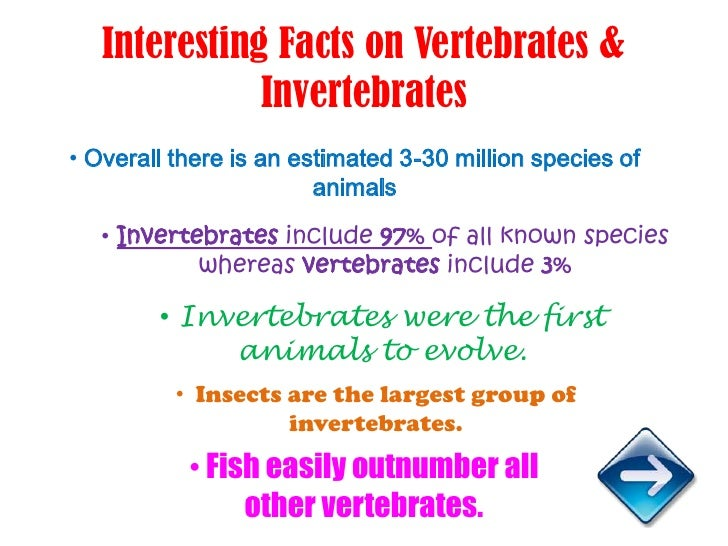 information about vertebrates and invertebrates