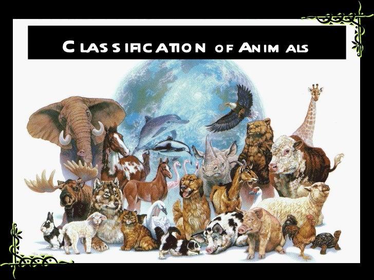 C las s ification of Anim als