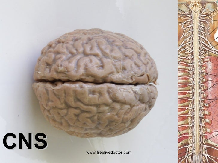 Classification of diseases of cns