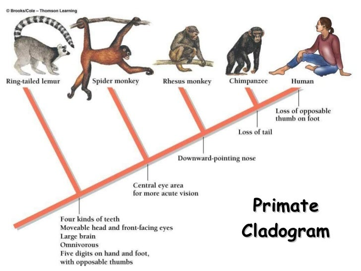 Classification of life taxonomy