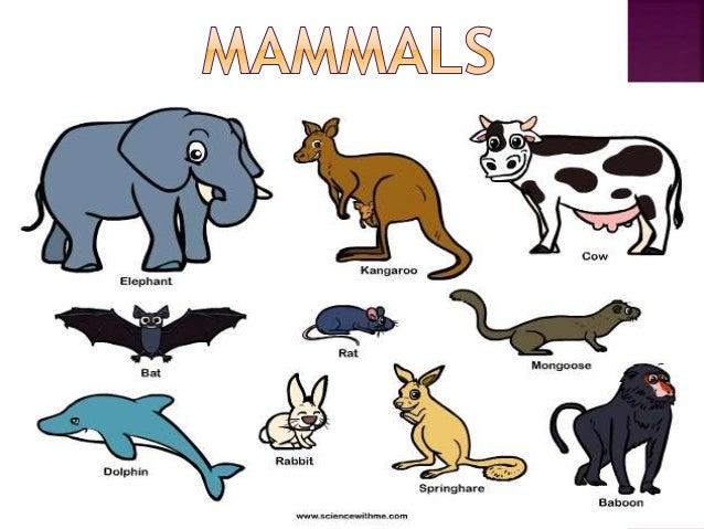 difference between vertebrates and invertebrates pdf