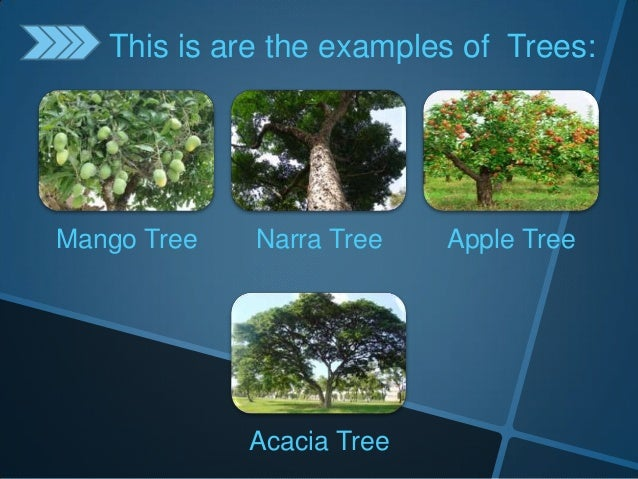 Classifying plants according to different kinds for Different types of plants and trees