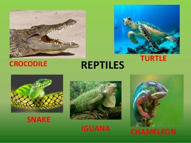 Classifying vertebrate...