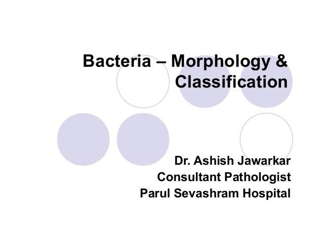 Bacteria – Morphology & Classification  Dr. Ashish Jawarkar Consultant Pathologist Parul Sevashram Hospital