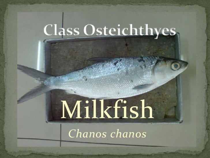 MilkfishChanos chanos