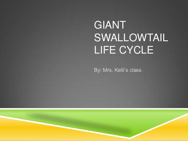 GIANT SWALLOWTAIL LIFE CYCLE By: Mrs. Kelli's class