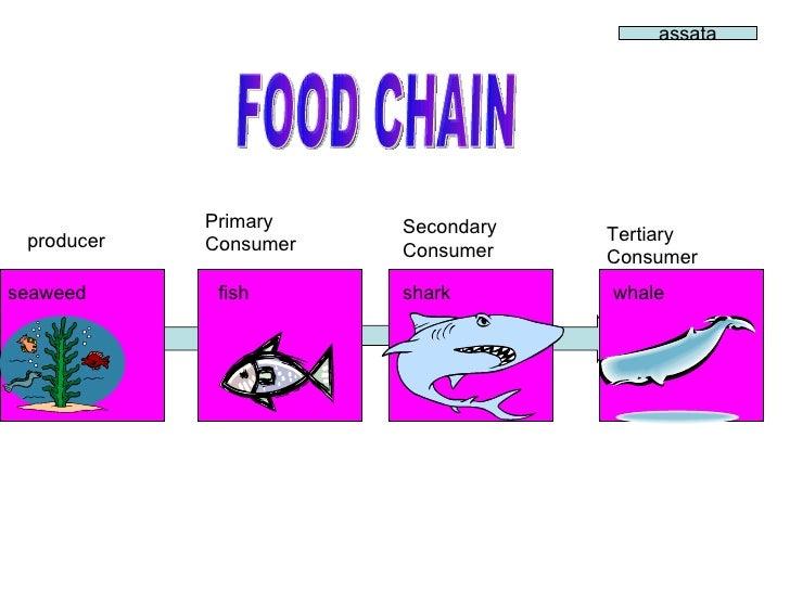 Seaweed Food Chain
