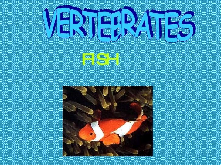 FISH VERTEBRATES