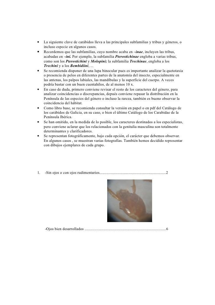 •    La siguiente clave de carábidos lleva a las principales subfamilias y tribus y géneros, o      incluso especie en alg...