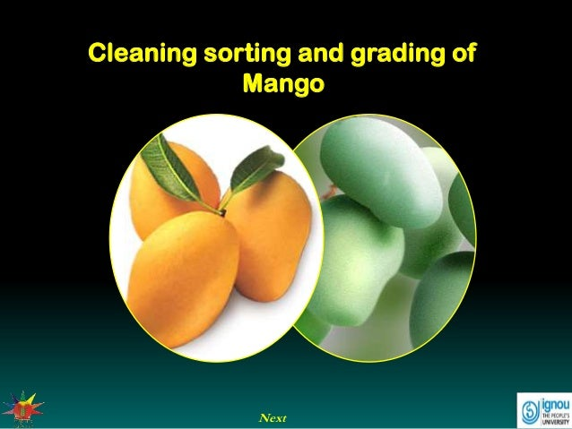 Next Cleaning sorting and grading of Mango