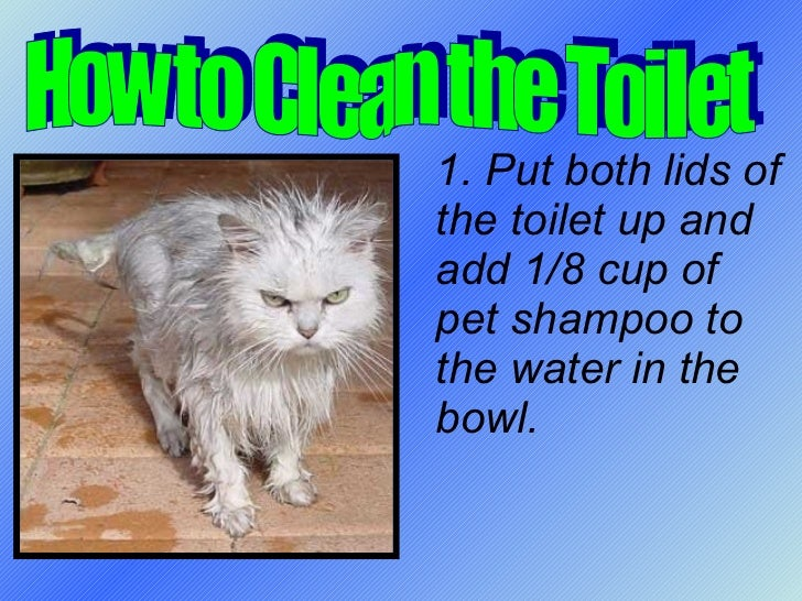 1. Put both lids of the toilet up and add 1/8 cup of pet shampoo to the water in the bowl. How to Clean the Toilet
