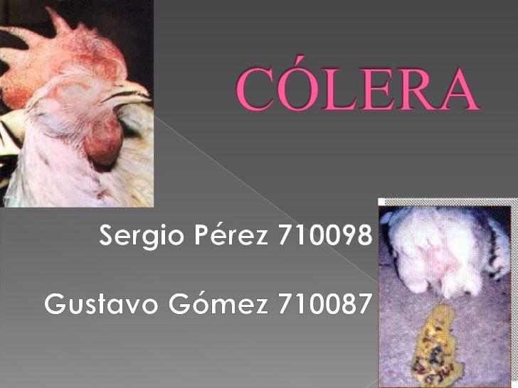  El cólera aviar es también llamado  cólera de los pollos, pasteurelosis  aviar y septicemia hemorrágica aviar.  Ésta es ...
