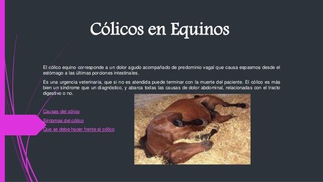 Cólicos en Equinos El cólico equino corresponde a un dolor agudo acompañado de predominio vagal que causa espasmos desde e...