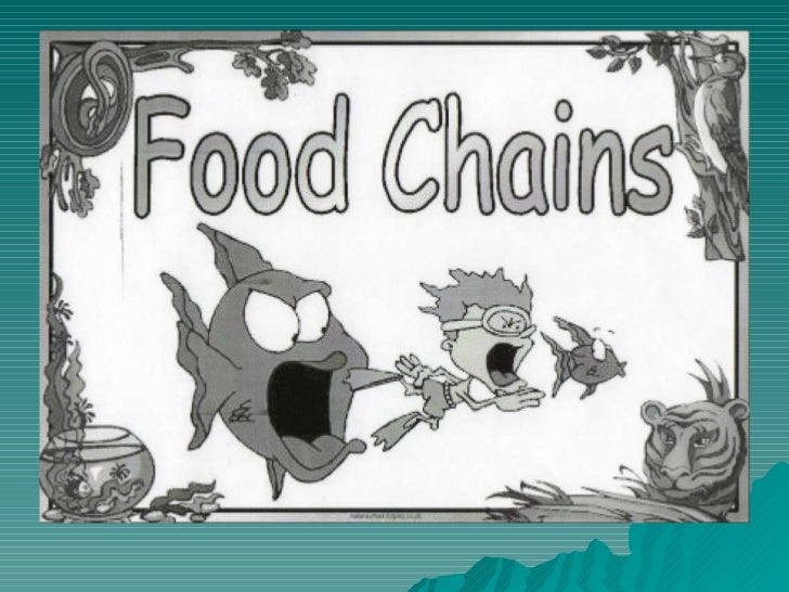 Clil & food chains