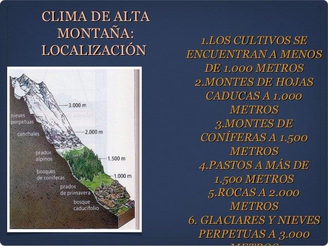 CLIMA DE ALTA  MONTAÑA:         1.LOS CULTIVOS SELOCALIZACIÓN    ENCUENTRAN A MENOS                    DE 1.000 METROS    ...