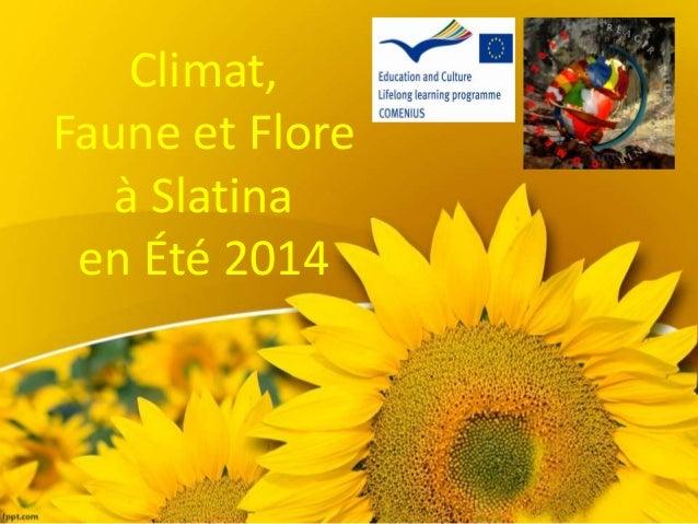 Climat, Faune et Flore à Slatina en Été 2014