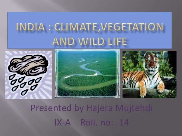 Presented by Hajera Mujtehdi IX-A Roll. no:- 14
