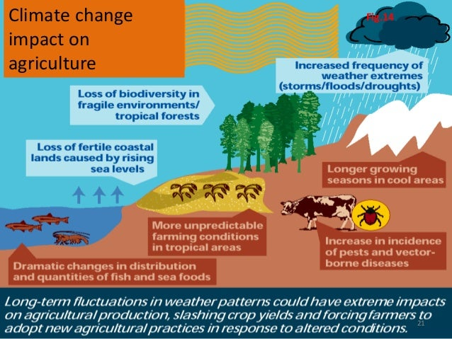 essay on the effect of climate change on food production