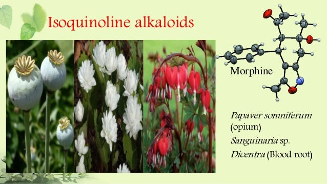 diterpenoid and steroidal alkaloids