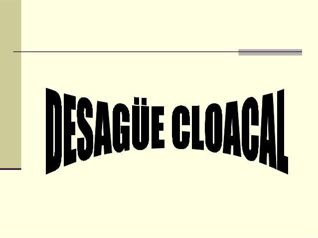 Cloacal presentacion