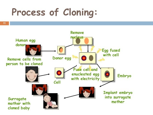 understanding the process of human cloning Lawyers can argue in a court of law that the individual created from this process would not be an i hope you now have a better understanding of the human cloning.