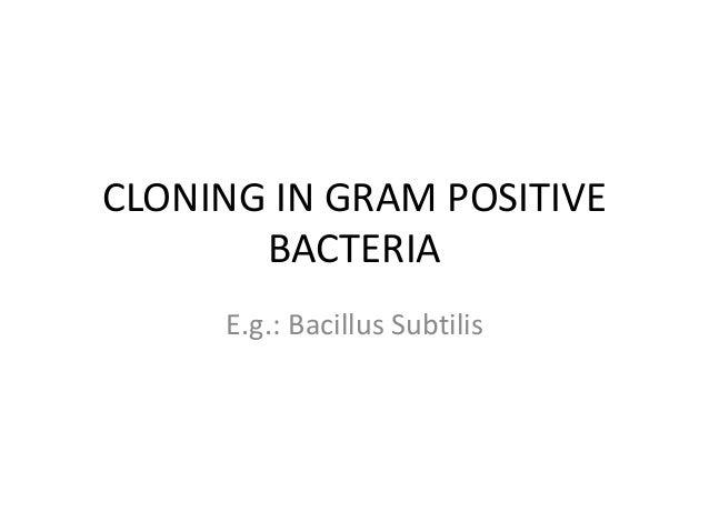 Cloning in gram positive bacteria by neelima sharma,neelima.sharma60@gmail.com,WCC CHENNAI