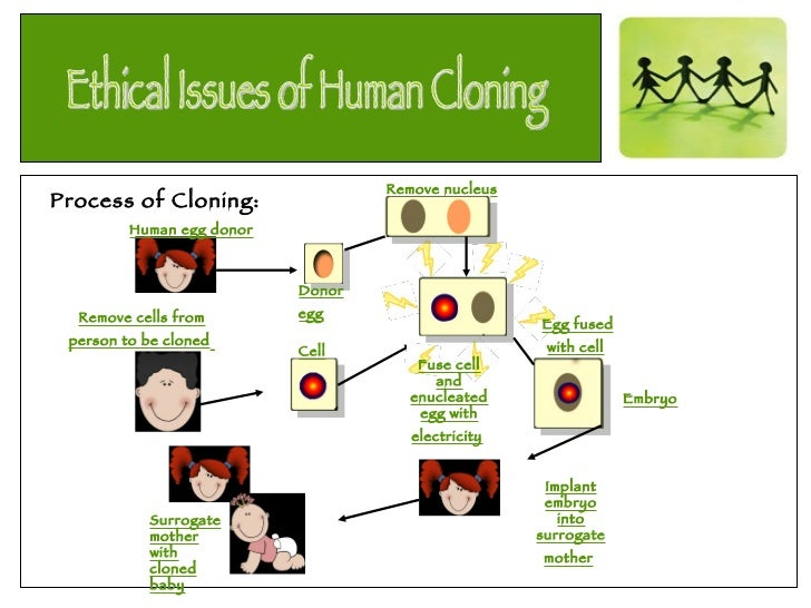 a research on clone and human cloning