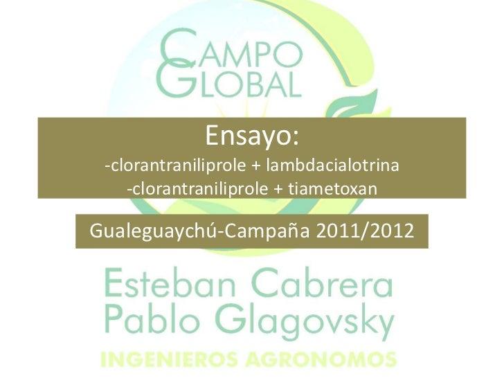 Ensayo: -clorantraniliprole + lambdacialotrina    -clorantraniliprole + tiametoxanGualeguaychú-Campaña 2011/2012