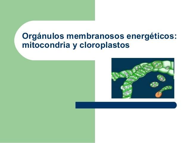 Orgánulos membranosos energéticos:mitocondria y cloroplastos