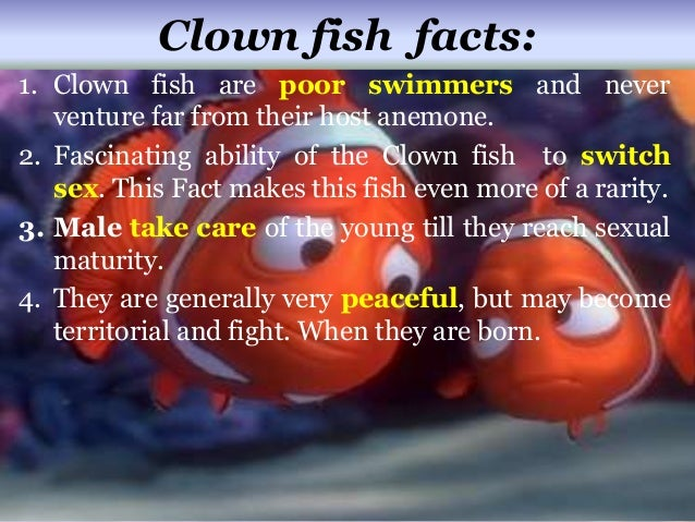 Clown fish for Interesting facts about fish