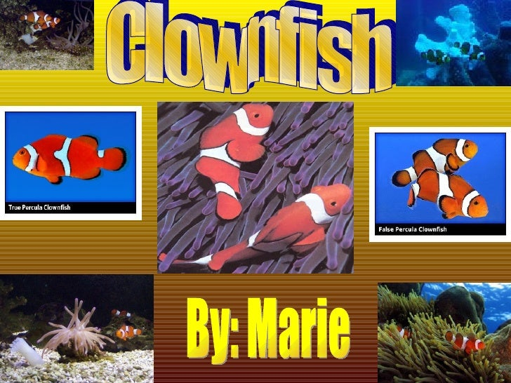 Clownfish By: Marie