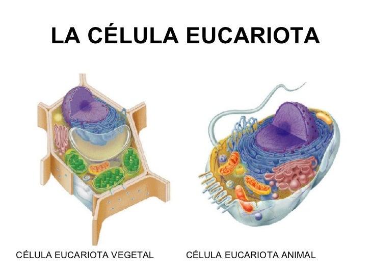 La célula: Unidad básica de todas las formas vivientes | Educación ...