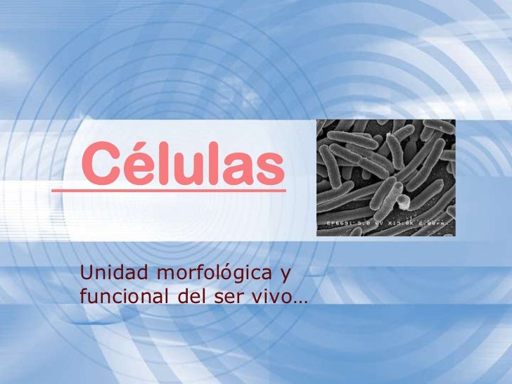 Células<br />Unidad morfológica y funcional del ser vivo…<br />