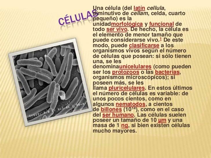 Células<br />Unacélula(dellatíncellula, diminutivo decellam, celda, cuarto pequeño) es la unidadmorfológicayfuncion...