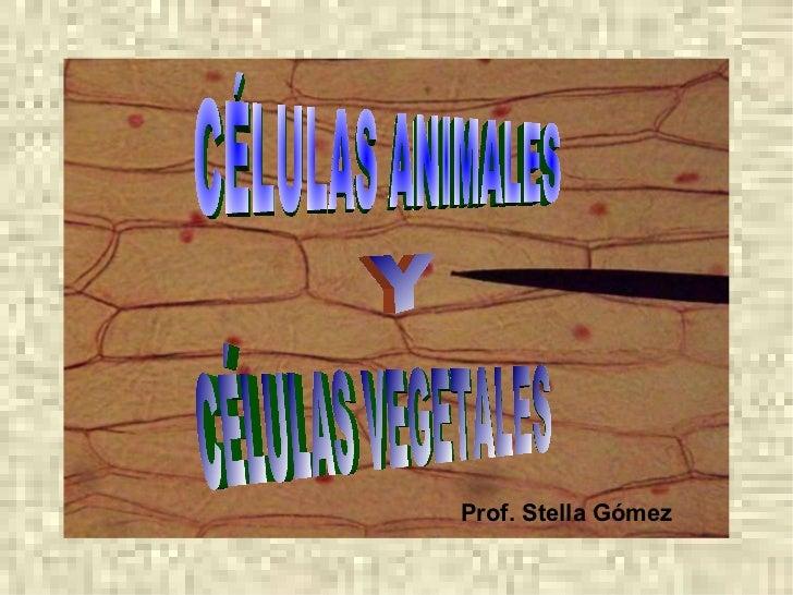 Prof. Stella Gómez CÉLULAS ANIMALES Y CÉLULAS VEGETALES
