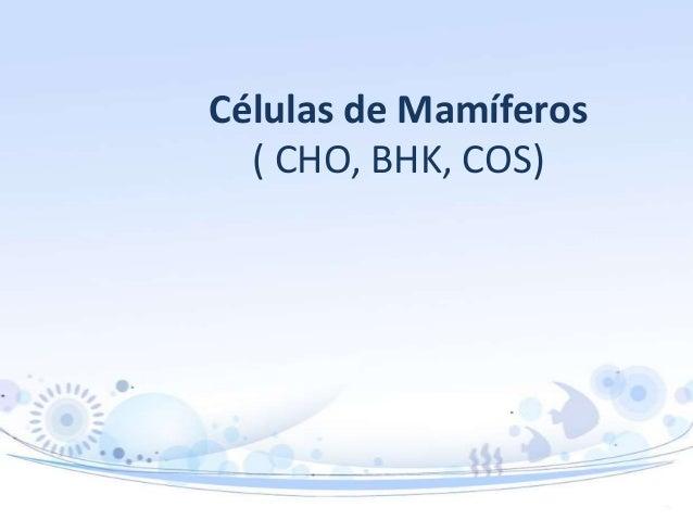 Células de Mamíferos ( CHO, BHK, COS)