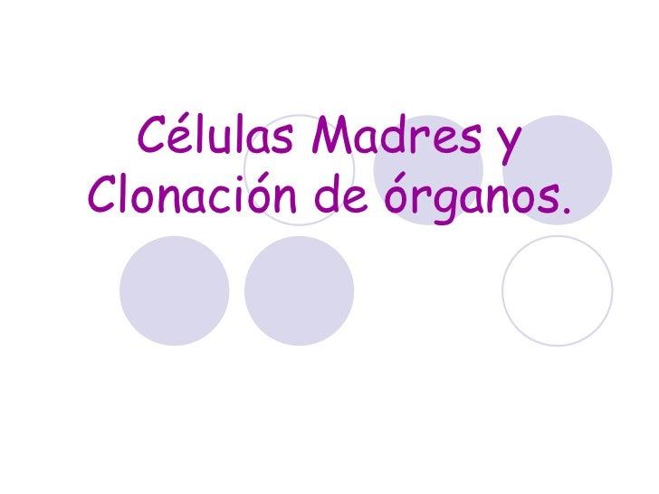 Células Madres yClonación de órganos.                    